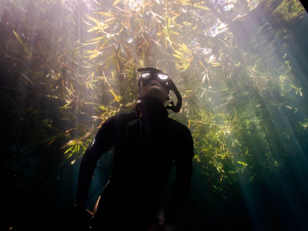 Plongée En Apnée À L'île Maurice